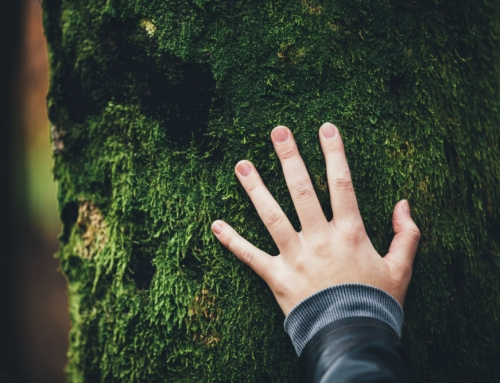 La sostenibilidad y sus formas